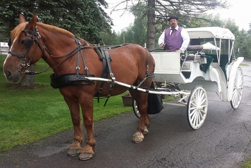 Bayfront Horse Carriage